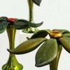 Piante succulenti, 2008 - Simone e Giovanni Cenedese Murano